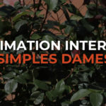 Animation interne simples dames